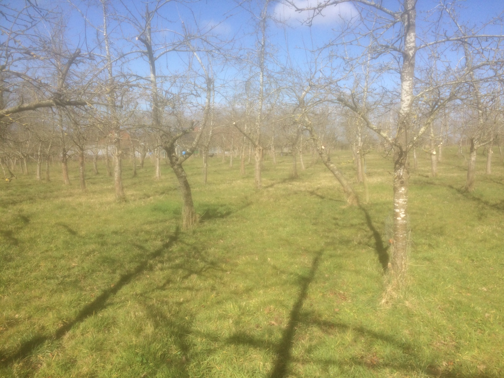 Orchards at Rest